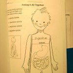Sample How My Body Works Worksheet Activity