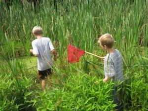 wetlandwaterobservation3