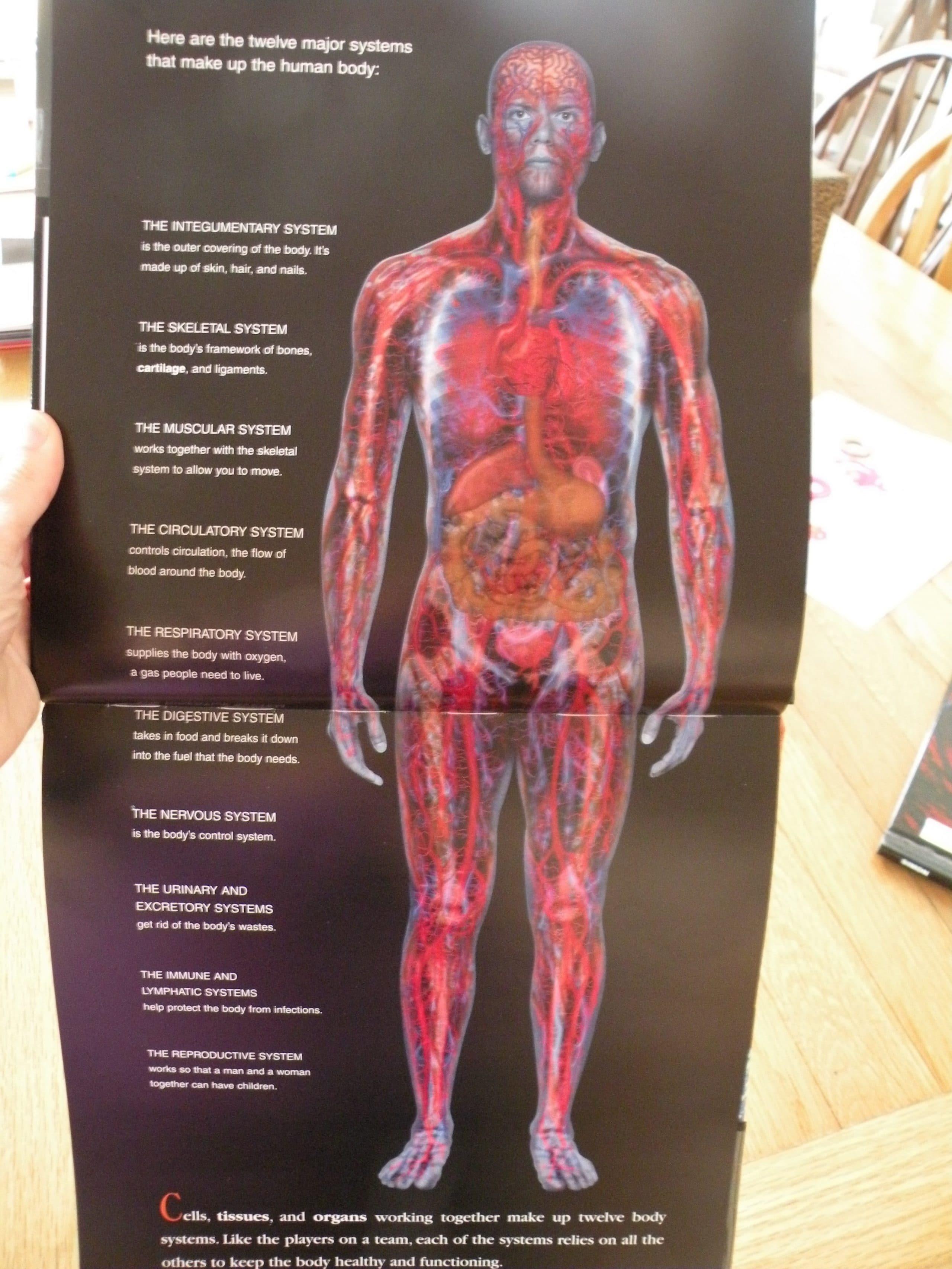 Simon Body Systems The Curriculum Choice