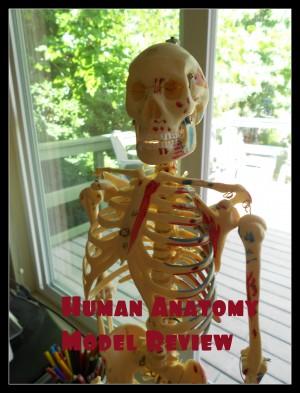 Human Anatomy Models and Study Aids