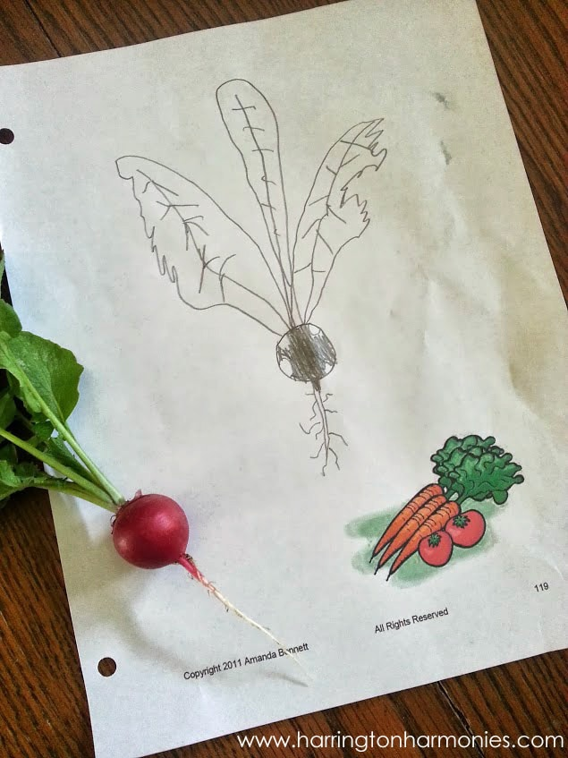 Notebook Page from Gardens by Amanda Bennet   The curriculum Choice