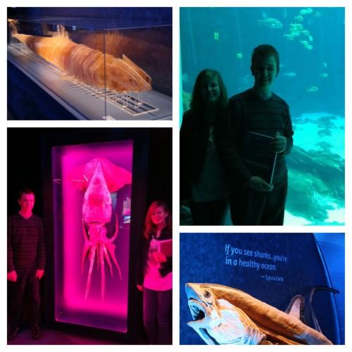 Georgia Aquarium marine biology studies www.thecurriculumchoice.com