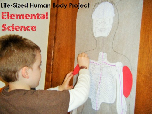 Life-Sized Human Body Project