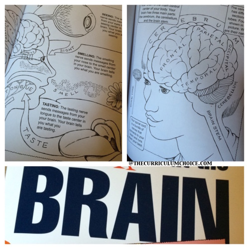 Dover Publications First Book About the Brain