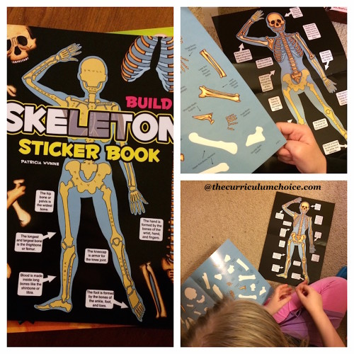 Build a Skeleton Sticker Book by Dover Publications