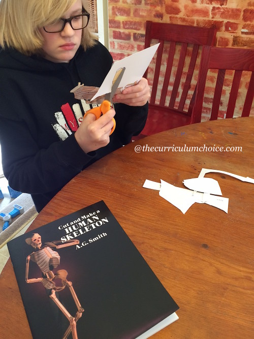 Cut and Make a Skeleton with Dover Publications for Homeschool