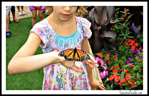 butterfly-garden-500x322