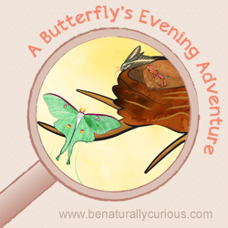 BNC_home_cover_Butterfly