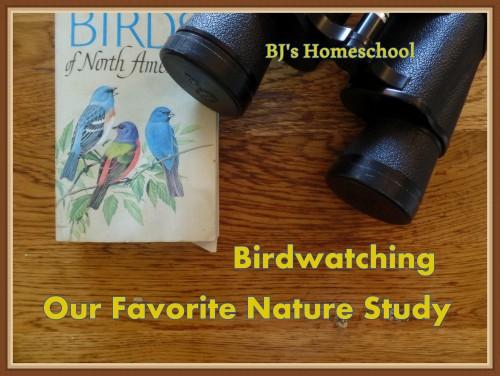 42 birding