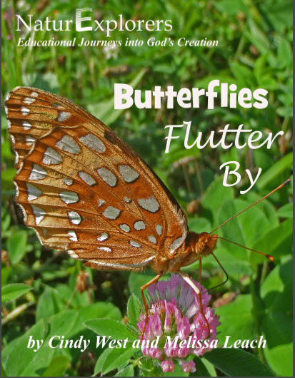 Spring, summer and autumn are the perfect months to study butterflies. Include a butterfly nature study each year with NaturExplorers Butterflies Flutter By