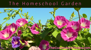 To help you homeschool outside this spring and summer, veteran Curriculum Choice homeschoolers have collected their suggestions about gardening, nature, nutritious eating, and more with the homeschool garden.